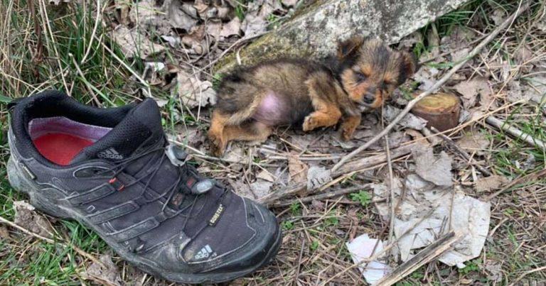 Cachorra abandonada encontrada en un zapato viejo vive ahora como una reina