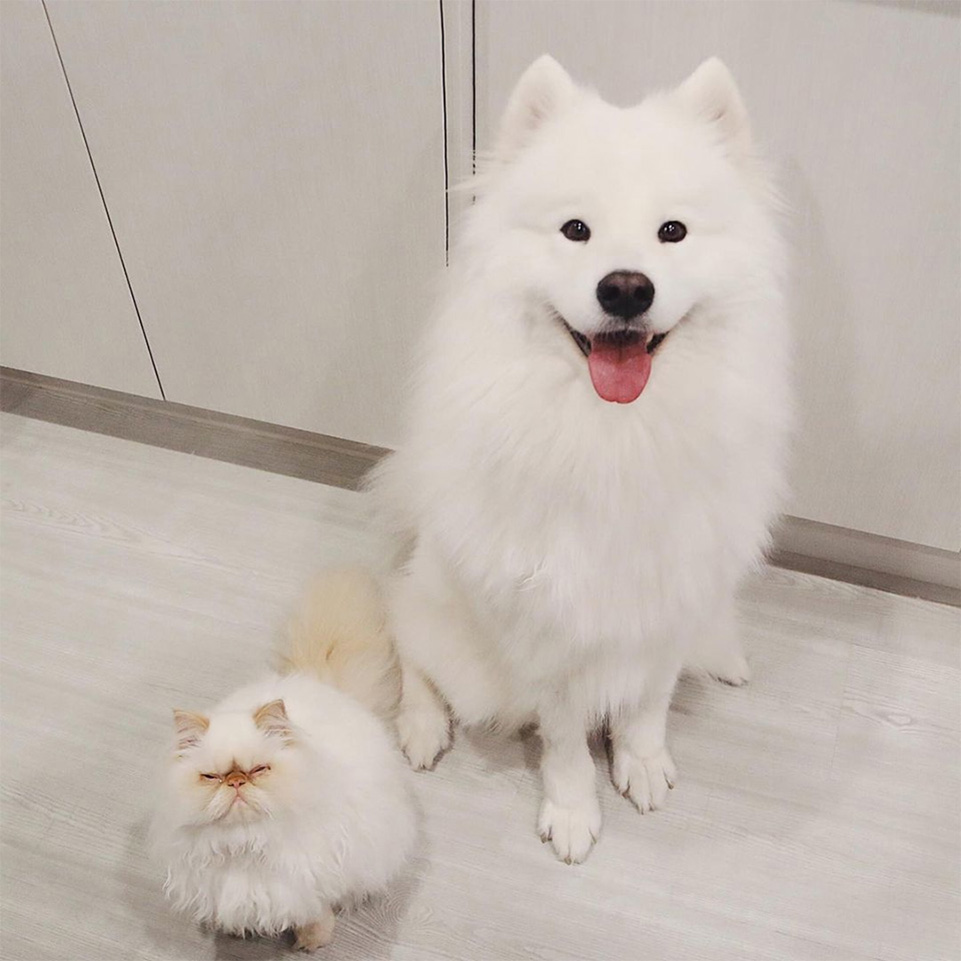 Casper y Romeo