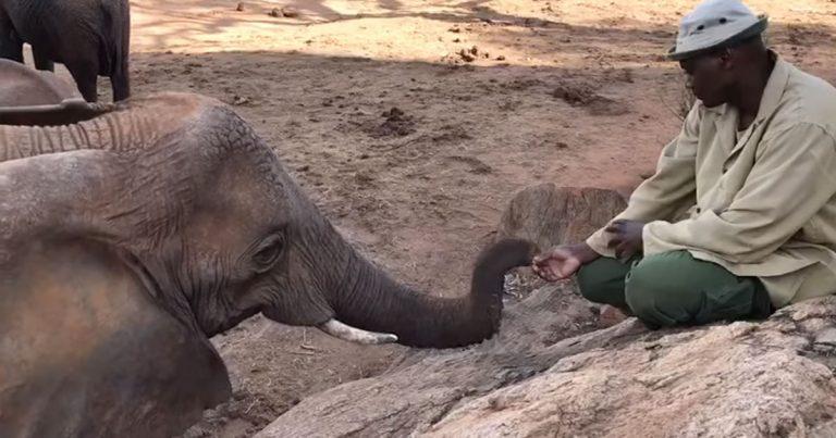 Elefanta rescatada emerge de la naturaleza para reunirse con el hombre que la crio