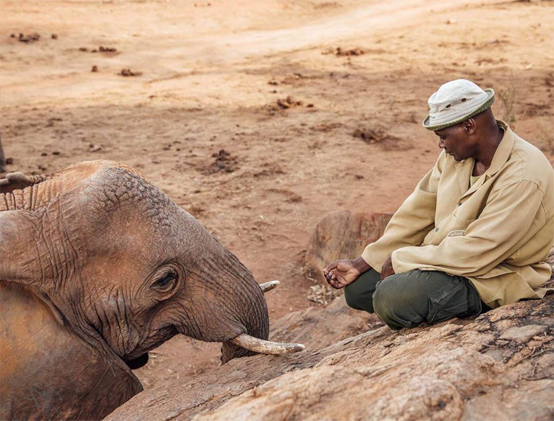 Elefanta rescatada emerge