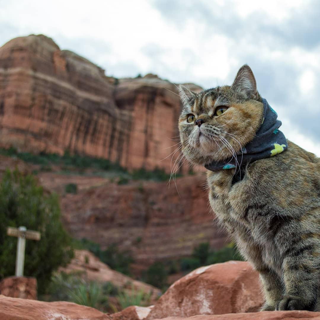 Gata exploradora ha visitado casi todo Estados Unidos