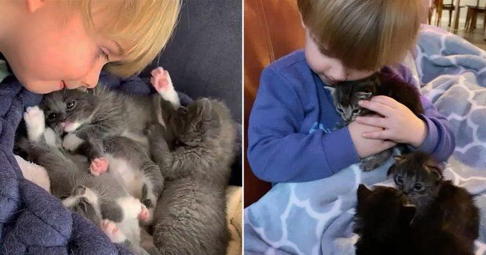 Gatitos encuentran al pequeño cuidador