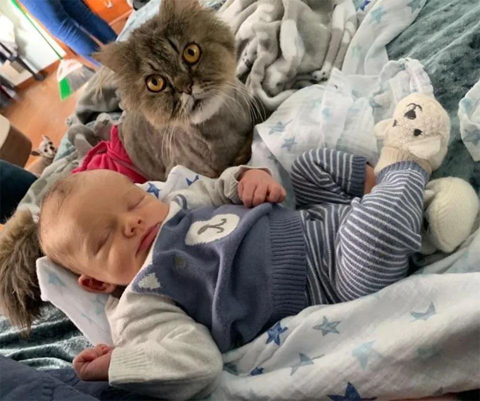 Gatitos encuentran pequeño cuidador