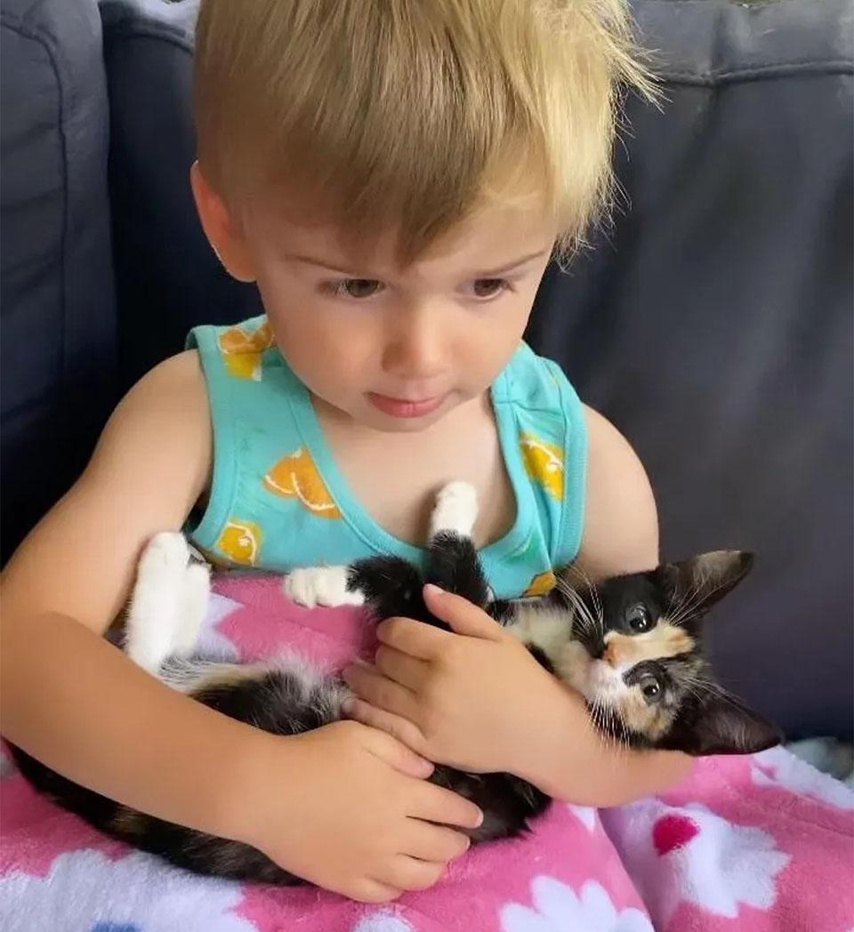 Gatitos encuentran pequeño