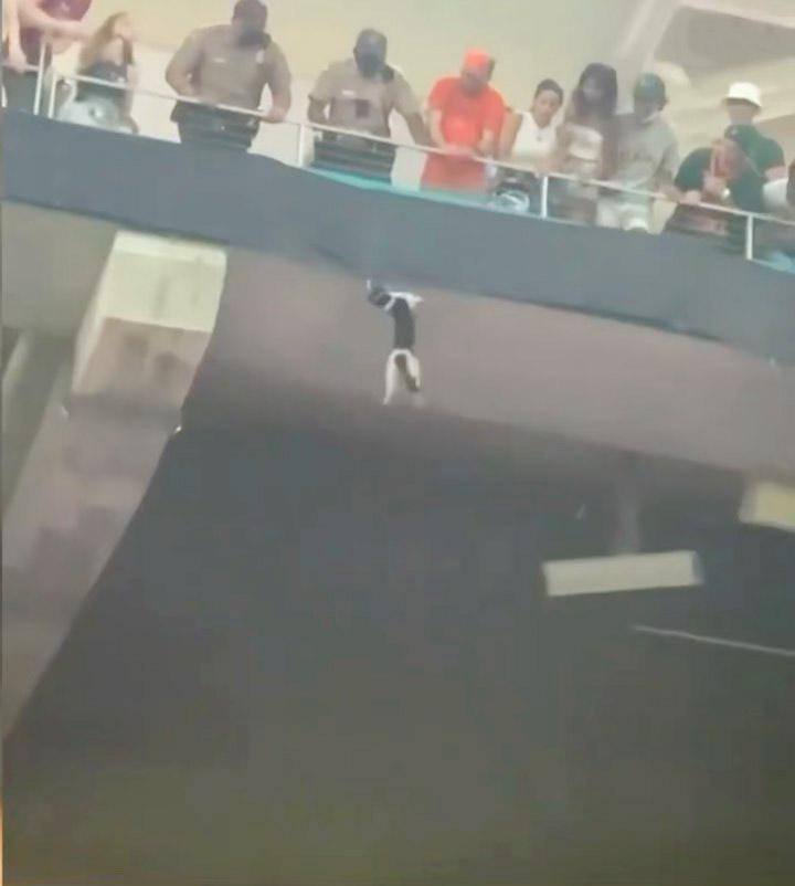Gato es atrapado por los fanáticos del estadio