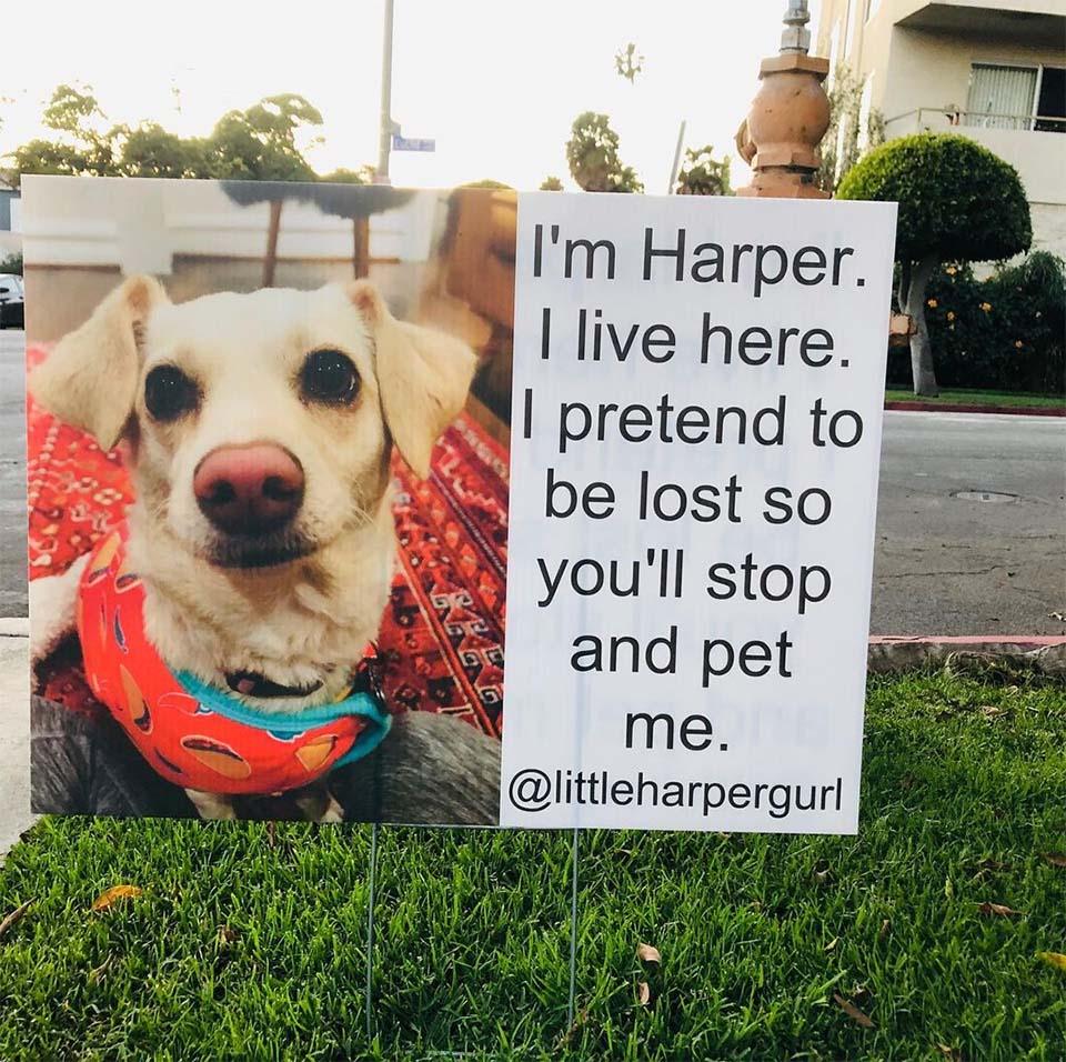 Letrero de Harper