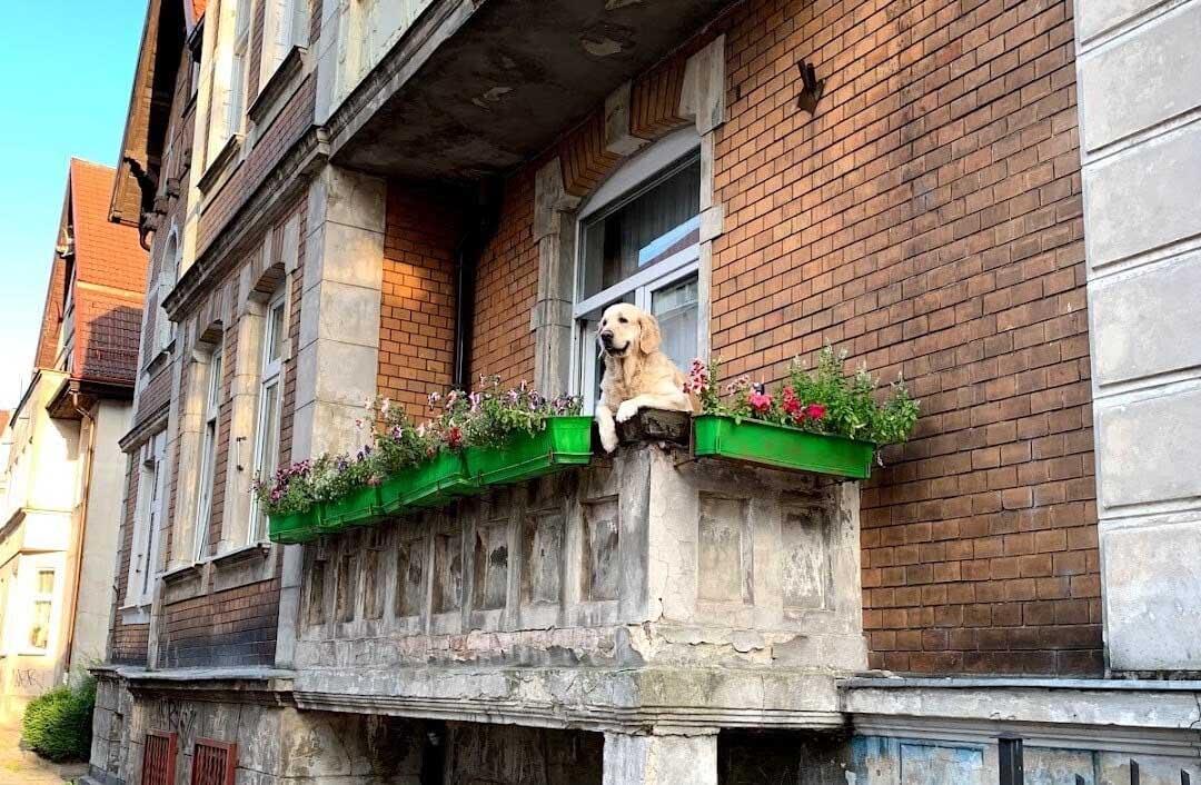 Milka perrita balcón