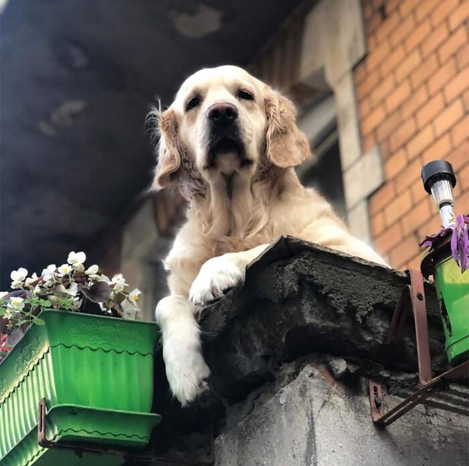 Milka perro del balcón