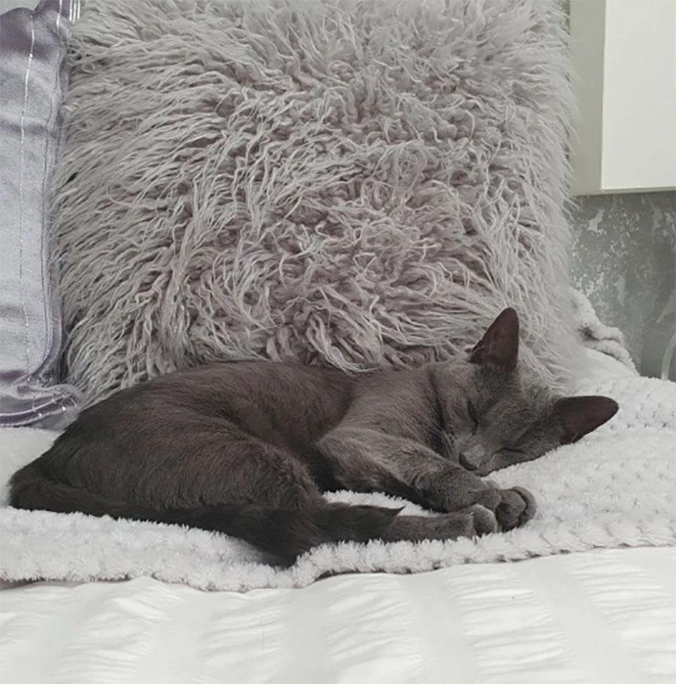 Minnie descansando
