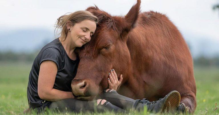 Mujer es la mejor amiga de un enorme toro que rescató siendo un pequeño becerro