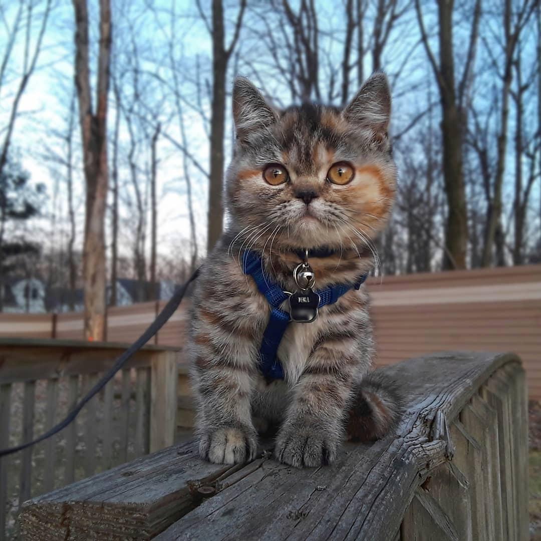Pequeña gatita exploradora