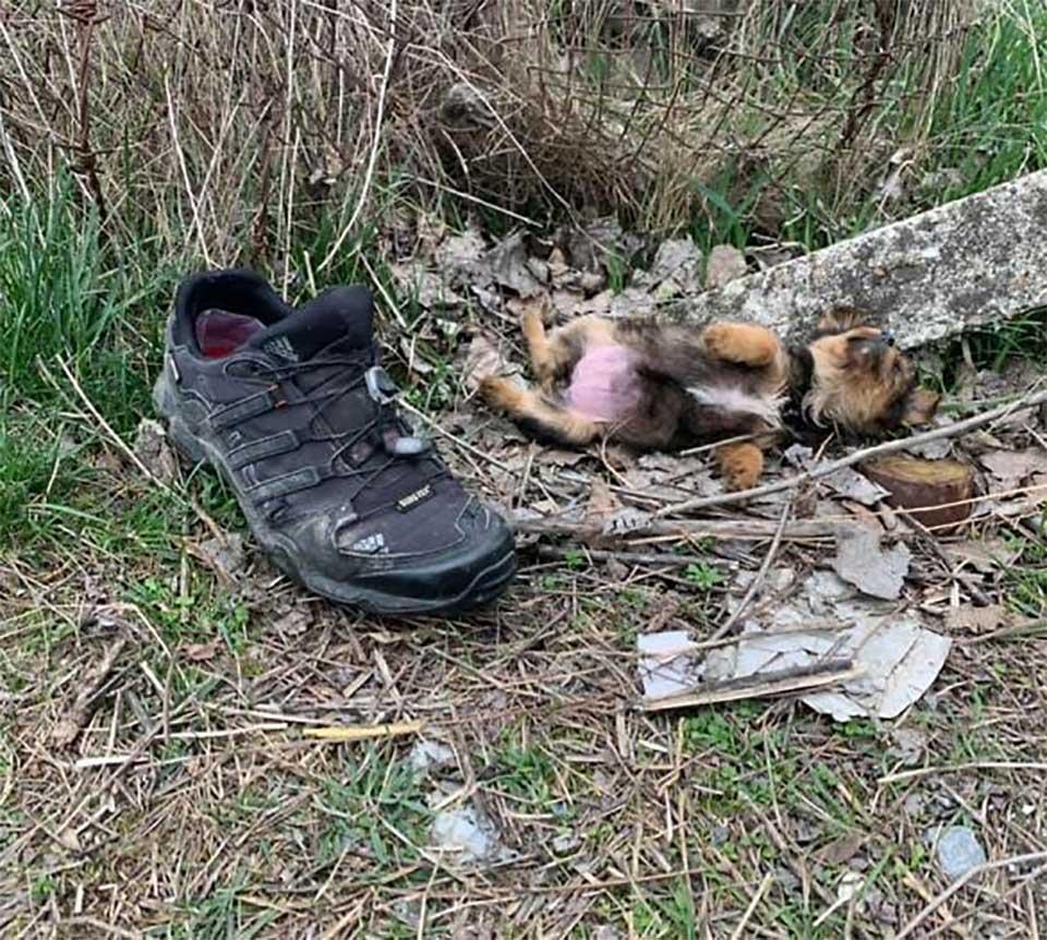 Perrito abandonado en un basurero