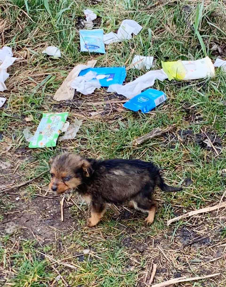 Perrito abandonado