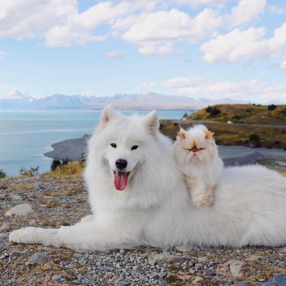 Perrito sonriente gato gruñón