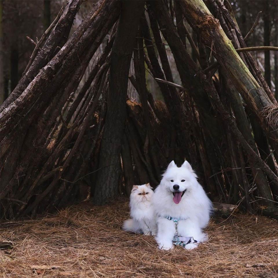 Perro sonriente hermanito gruñón