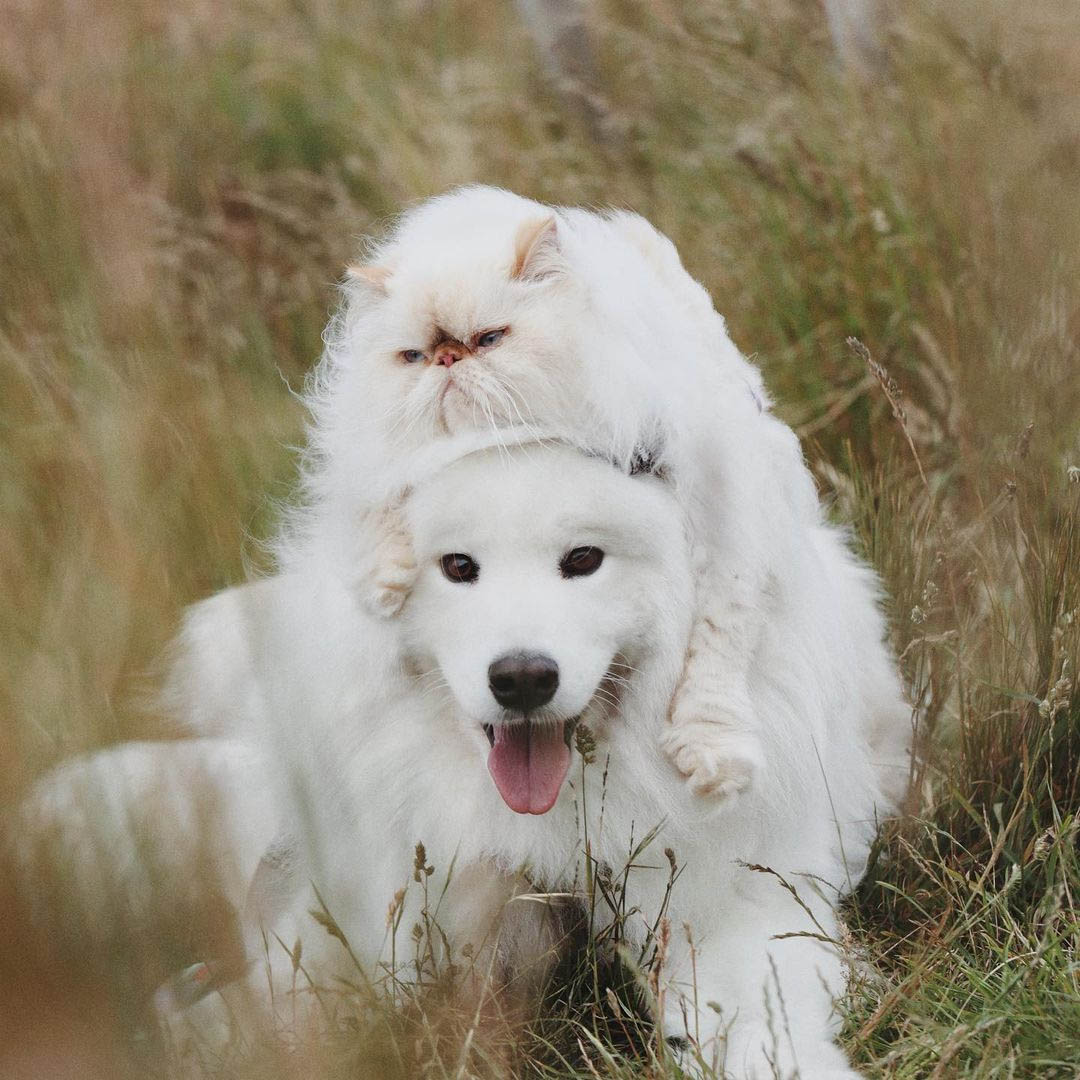 Perro sonriente y hermanito