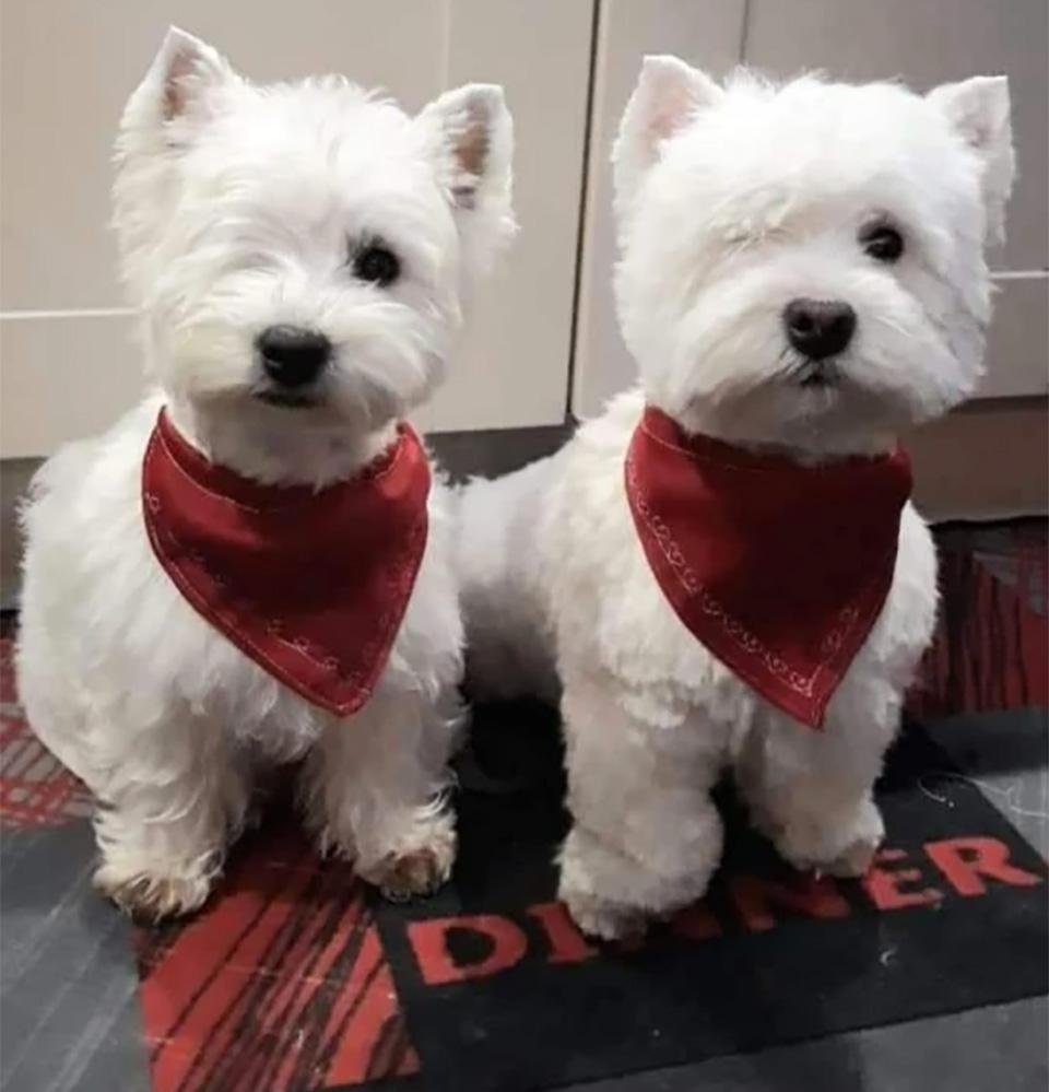 Perritos gemelos rescatados adoptados