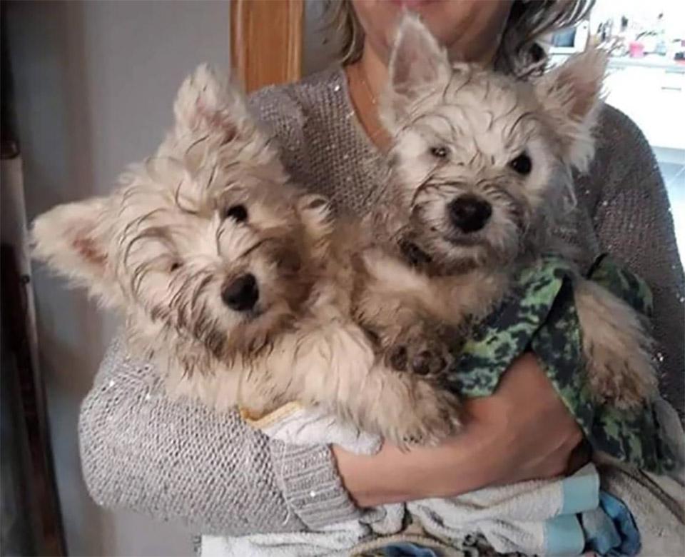 Perritos gemelos rescatados