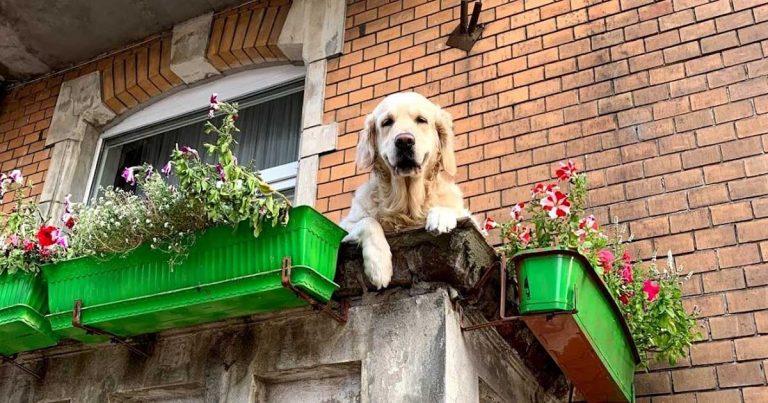 Esta 'perrita del balcón' se convirtió en una atracción local para los turistas