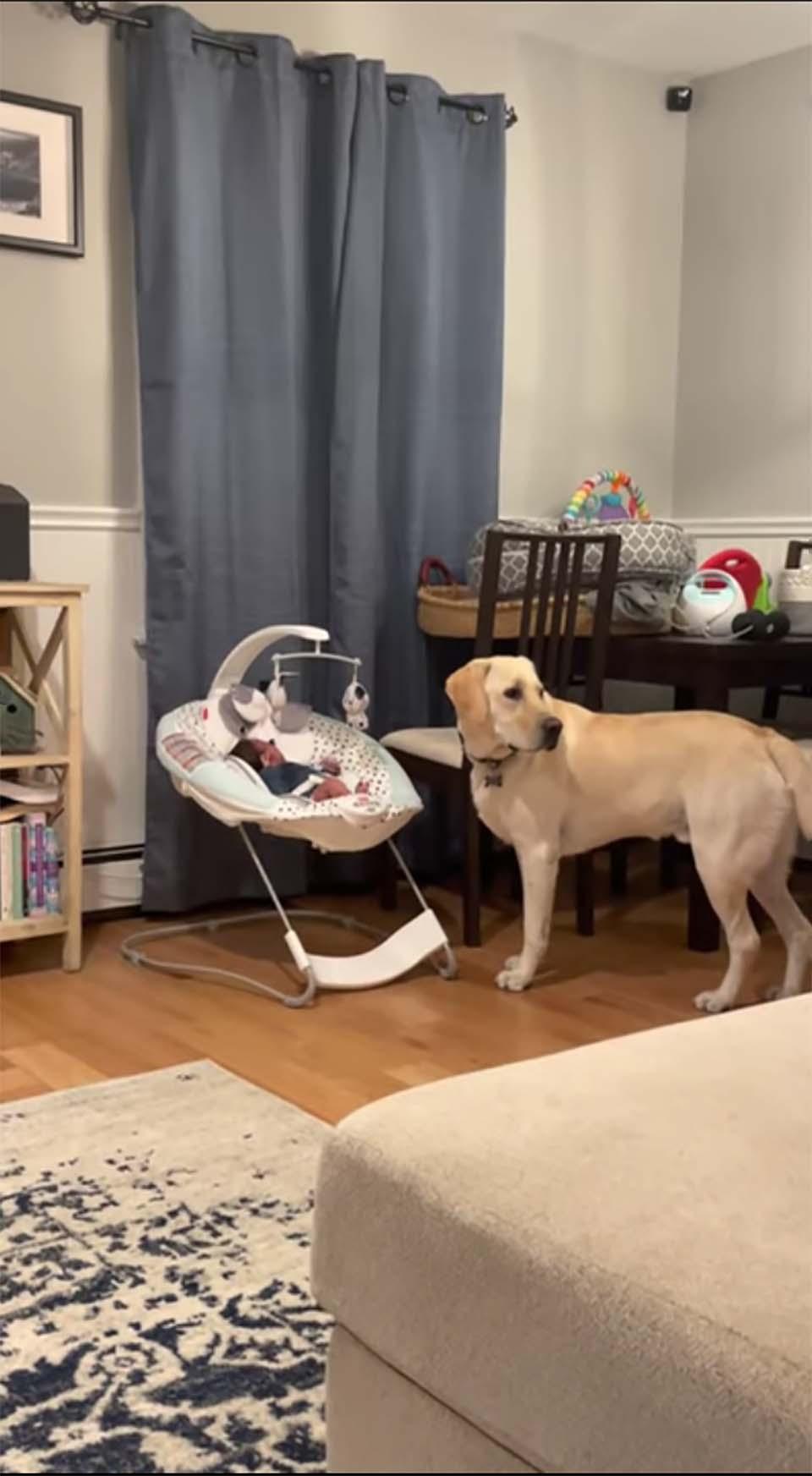 Perro escucha al bebé llorar