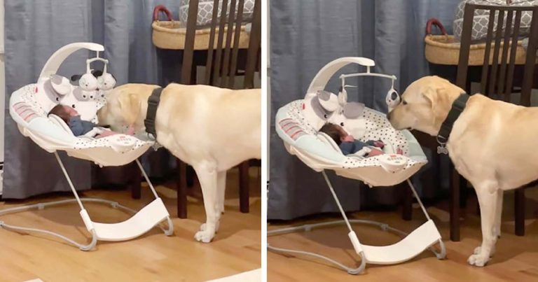 Perro escucha al bebé llorar y no lo deja solo hasta calmarlo