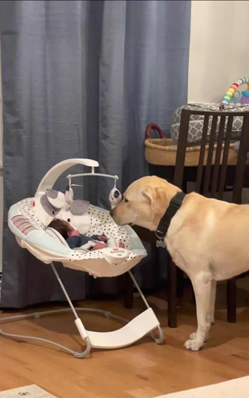 Perro escucha al bebé y lo consuela