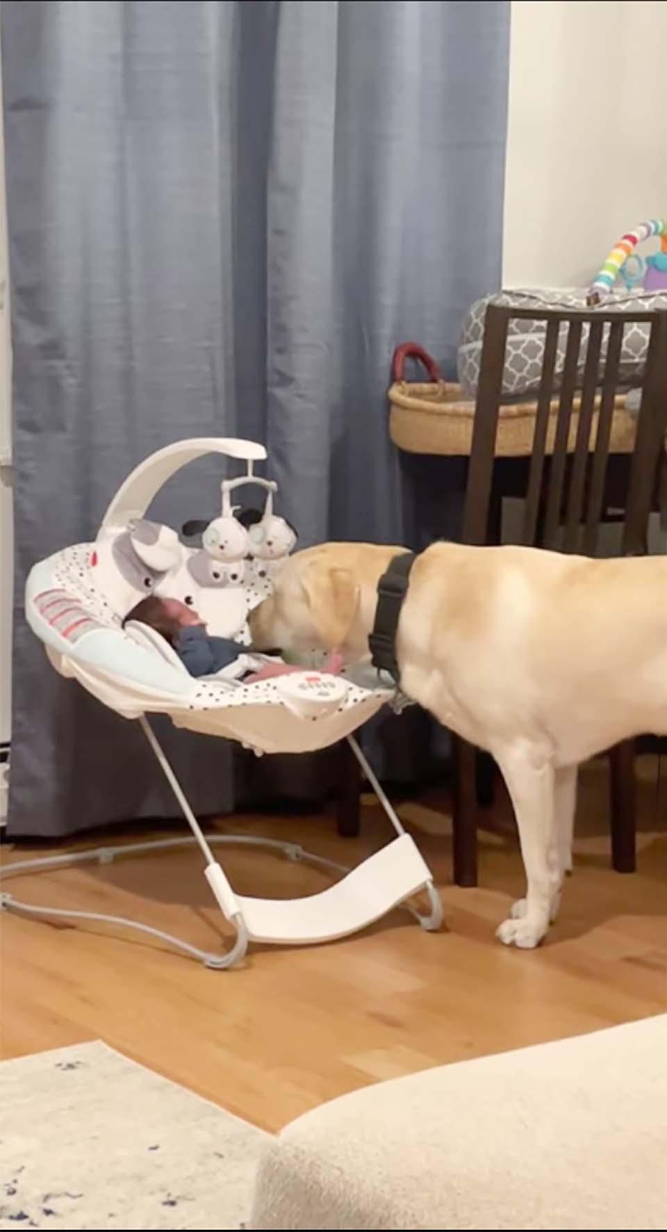 Perro escucha al bebé y trata de calmarlo