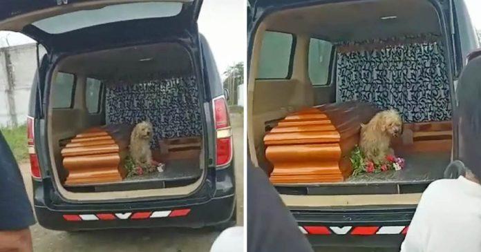 Perro fiel insiste en quedarse al lado de su madre hasta el final