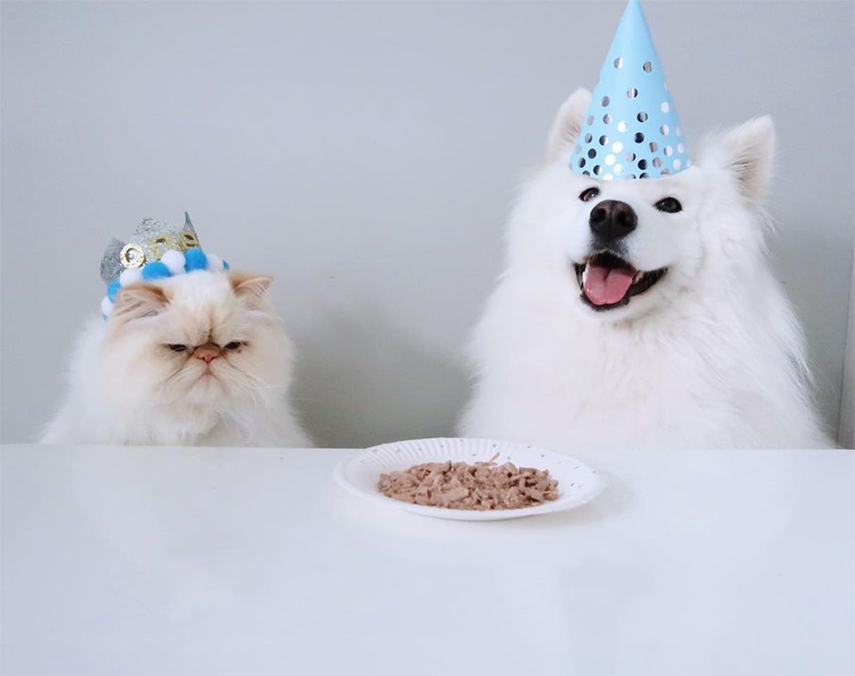 Romeo y Casper cumpleaños