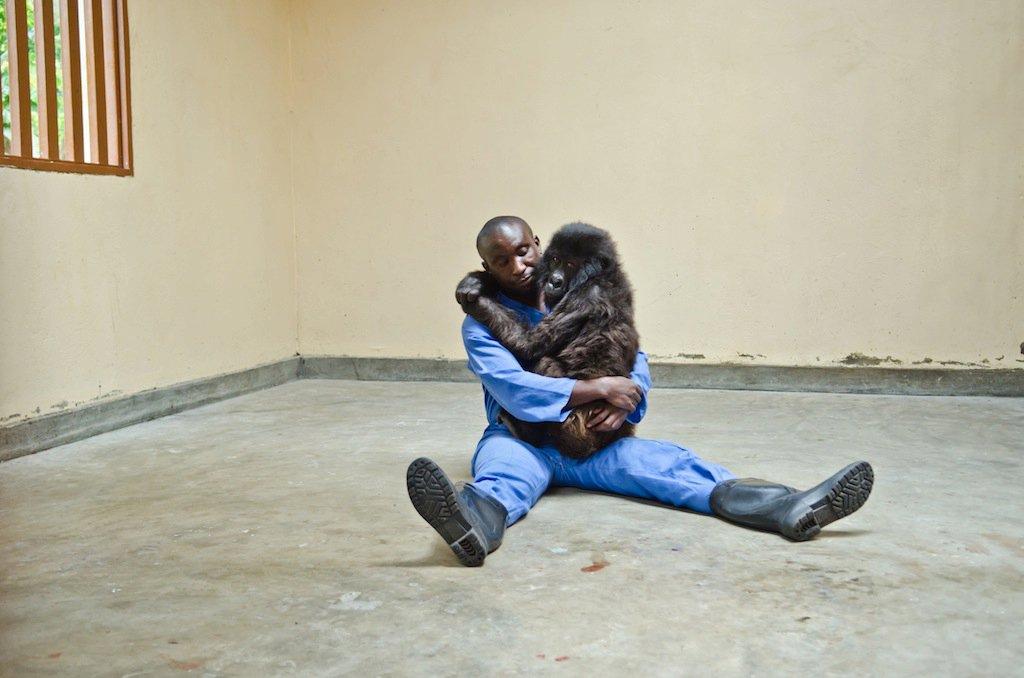 Adorable gorila y su amigo humano