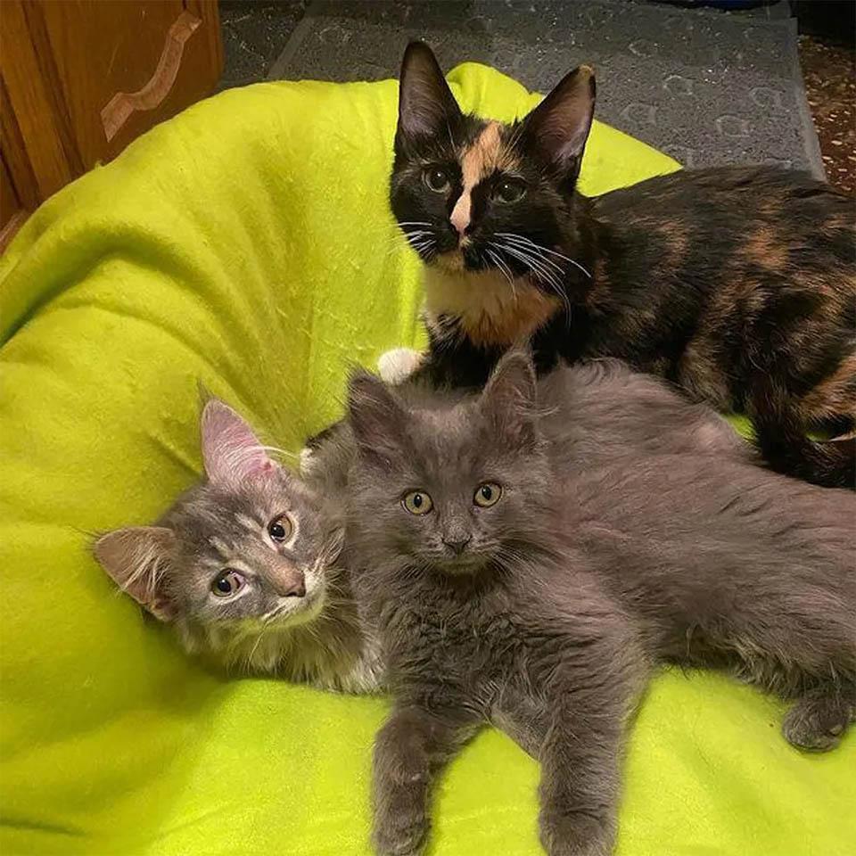 Gatitos con amiga