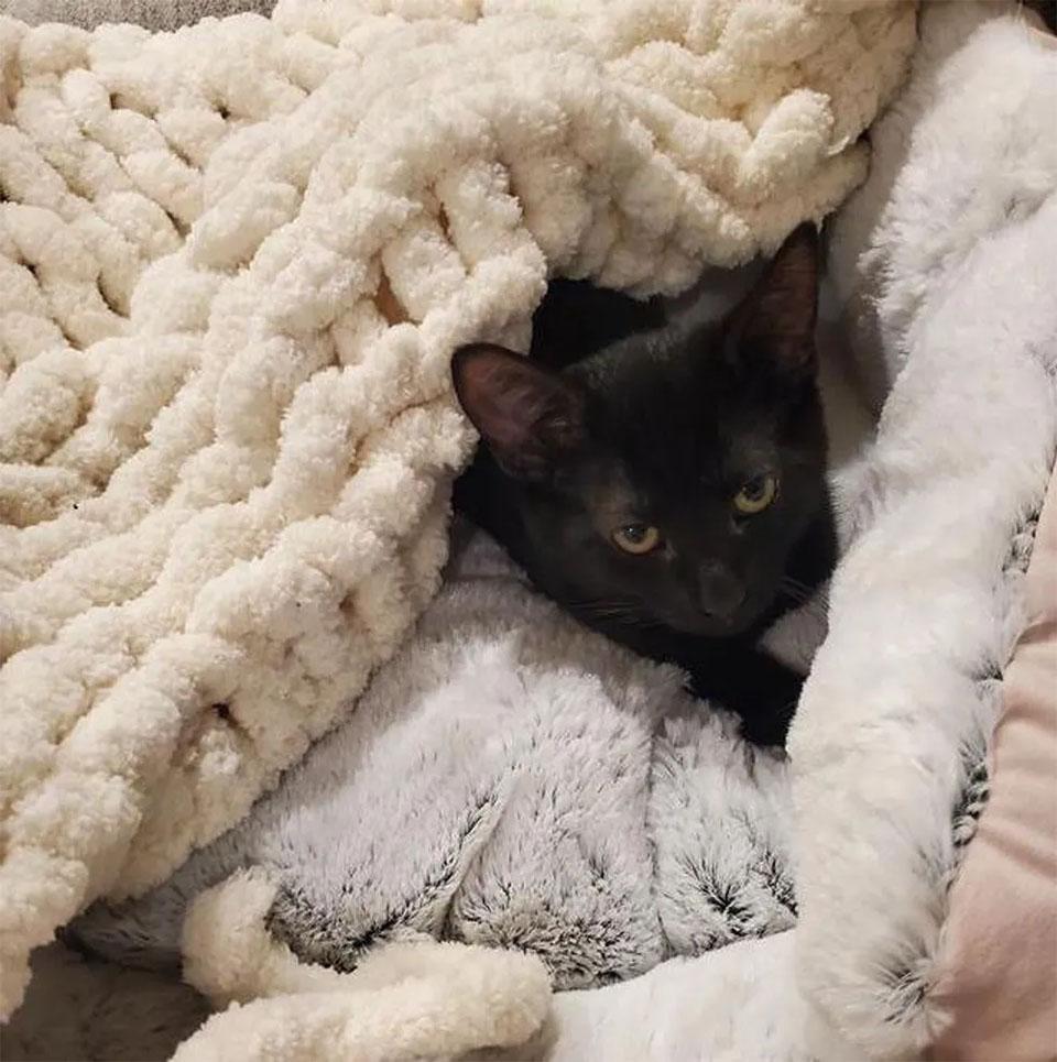 Gatitos nueva vida