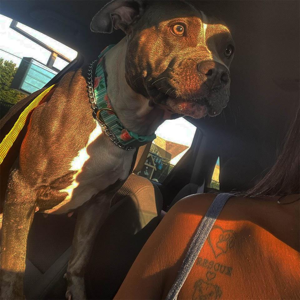 Nina rescata perrita sin hogar