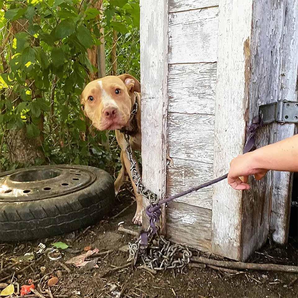 Perro abandonado en patio