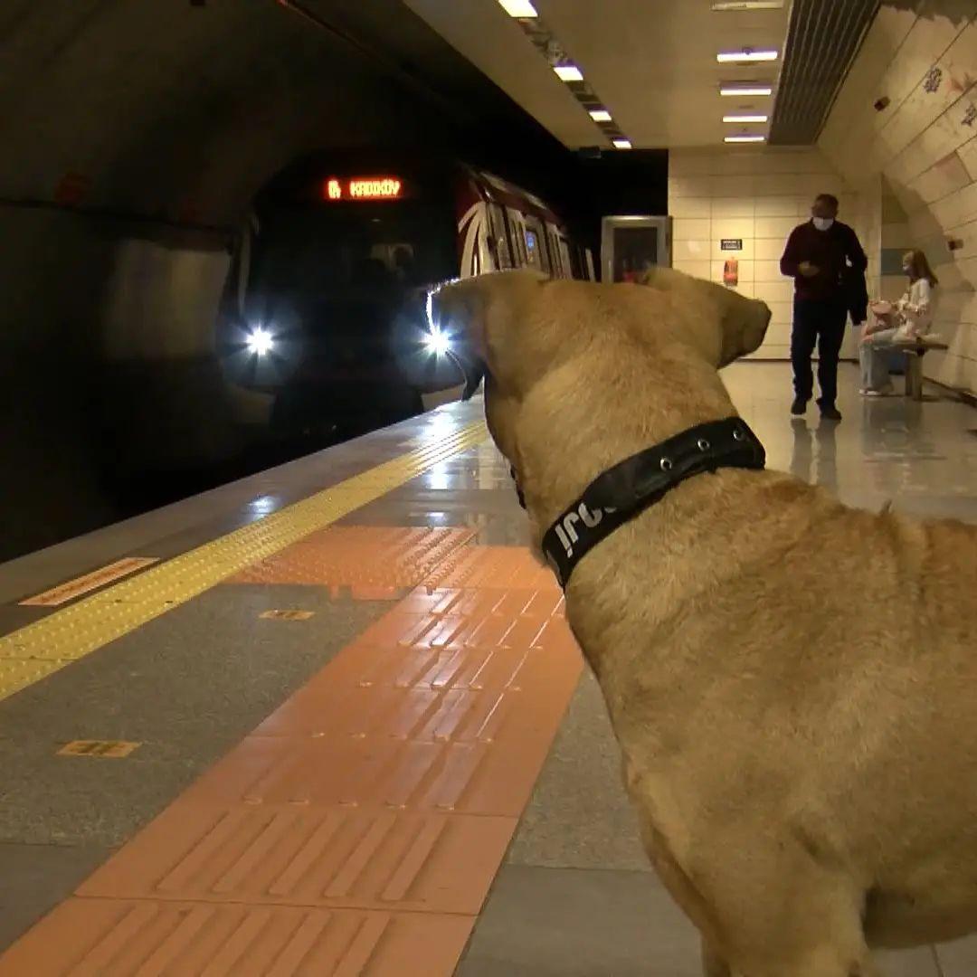 Perro sin hogar usa el transporte público para viajar por la ciudad
