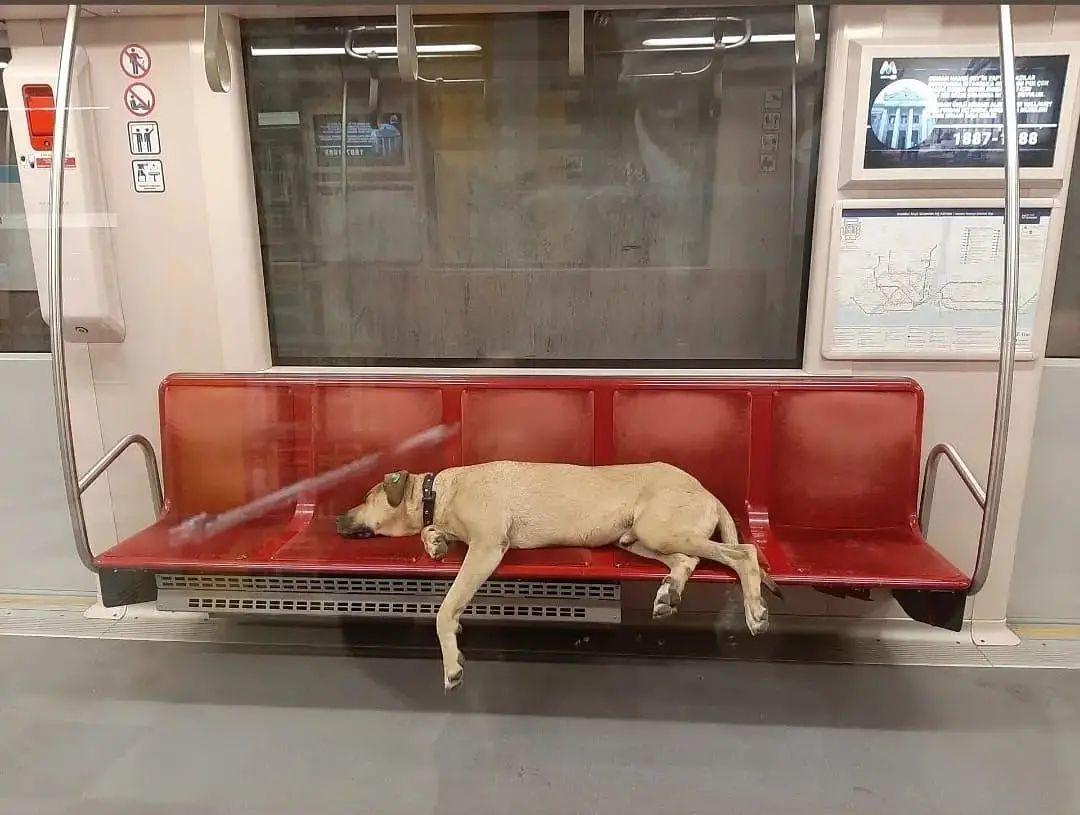 Perro viaja por la ciudad